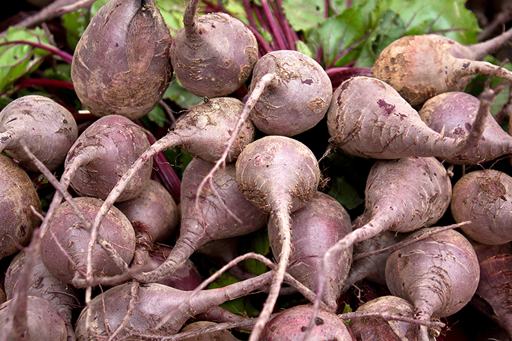 How To Harvest An Endless Supply Of Beets From Your Back Yard Lifesolutionsplus